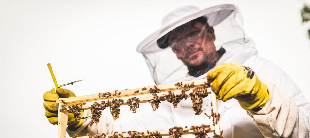 Mehiläistarhaajan Ammattitutkinto